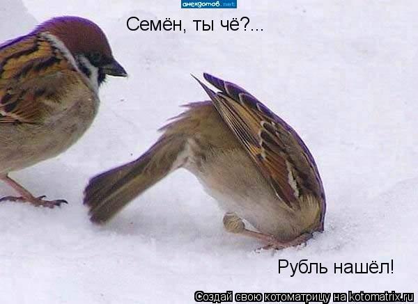Котоматрица: Семён, ты чё?... Рубль нашёл!