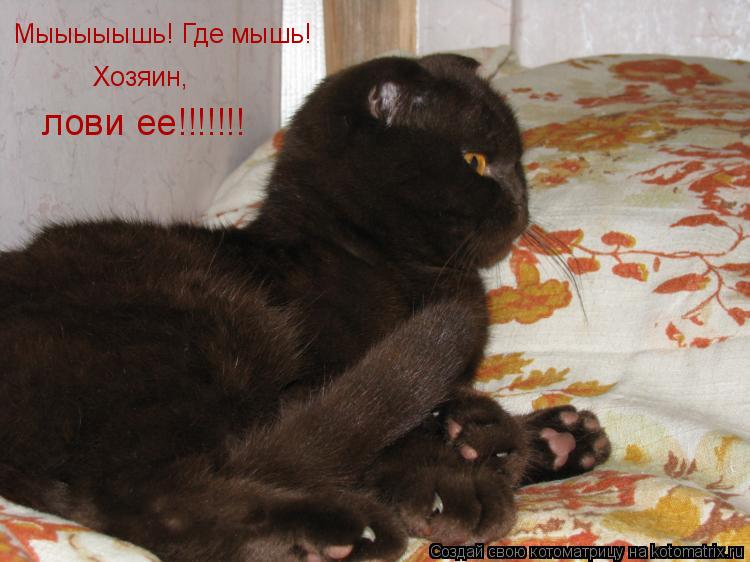 Котоматрица: Мыыыыышь! Где мышь! Хозяин,  лови ее!!!!!!!