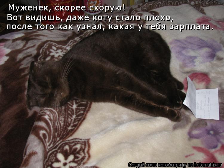 Котоматрица: Муженек, скорее скорую! Вот видишь, даже коту стало плохо, после того как узнал, какая у тебя зарплата.