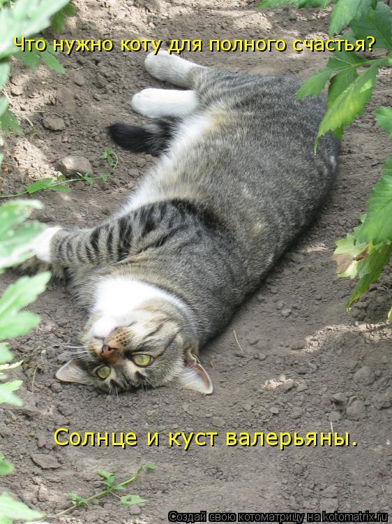 Котоматрица: Солнце и куст валерьяны. Что нужно коту для полного счастья?