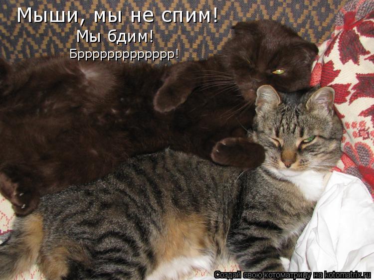 Котоматрица: Мыши, мы не спим!  Мы бдим! Бррррррррррррр!