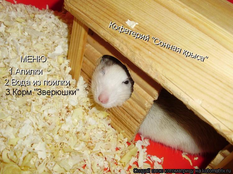 """Котоматрица: Кофетерий """"Сонная крыса"""" МЕНЮ: 1.Апилки 2.Вода из поилки 3.Корм """"Зверюшки"""""""