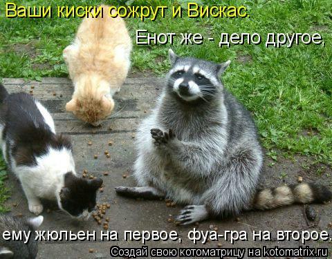 Котоматрица: Ваши киски сожрут и Вискас. Енот же - дело другое, ему жюльен на первое, фуа-гра на второе...