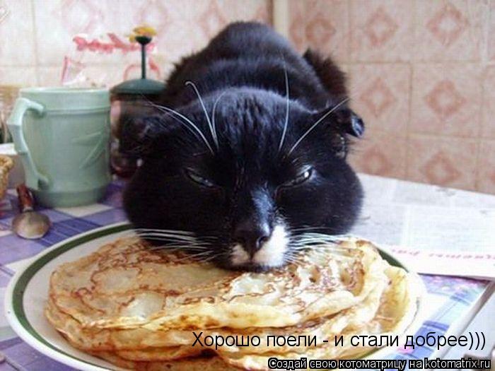 Котоматрица: Хорошо поели - и стали добрее)))