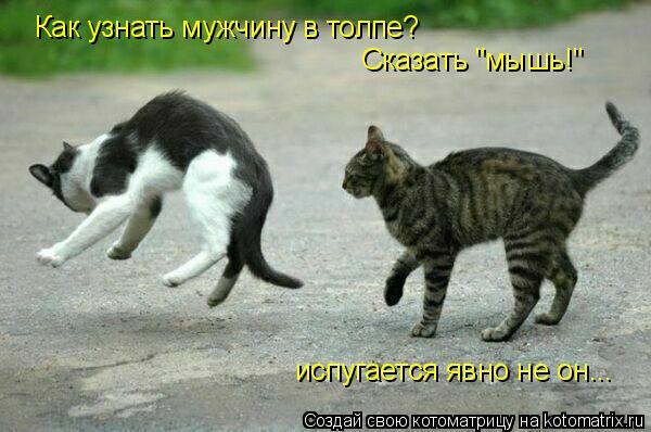 """Котоматрица: Как узнать мужчину в толпе?  Сказать """"мышь!"""" испугается явно не он..."""