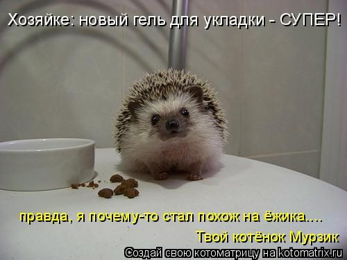 Котоматрица: правда, я почему-то стал похож на ёжика.... Твой котёнок Мурзик Хозяйке: новый гель для укладки - СУПЕР!