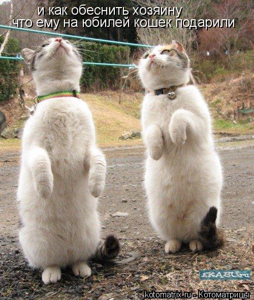 Котоматрица: и как обеснить хозяину что ему на юбилей кошек подарили
