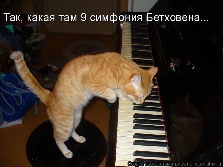 Котоматрица: Так, какая там 9 симфония Бетховена...