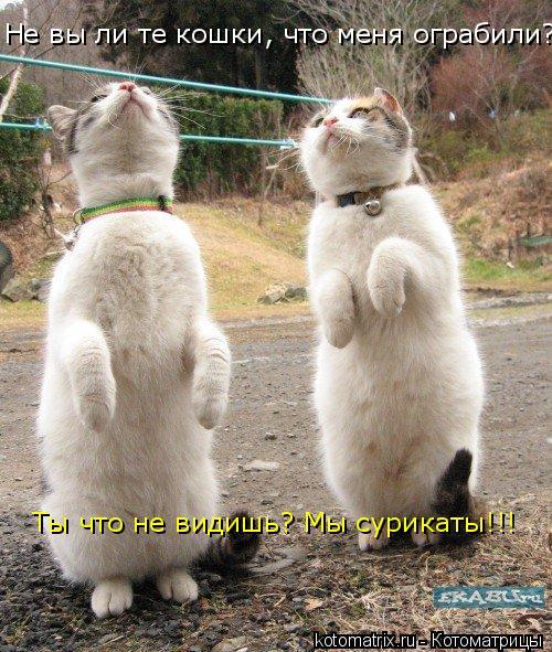 Котоматрица: Не вы ли те кошки, что меня ограбили? Ты что не видишь? Мы сурикаты!!!