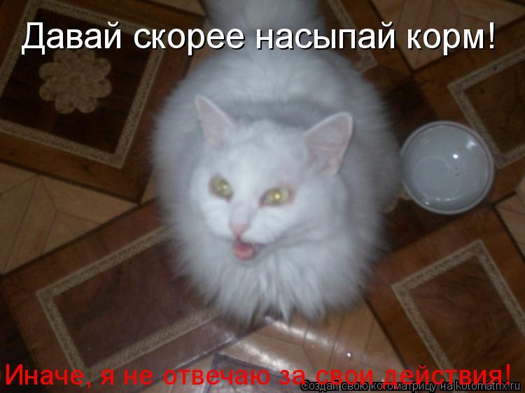 Котоматрица: Давай скорее насыпай корм! Иначе, я не отвечаю за свои действия!