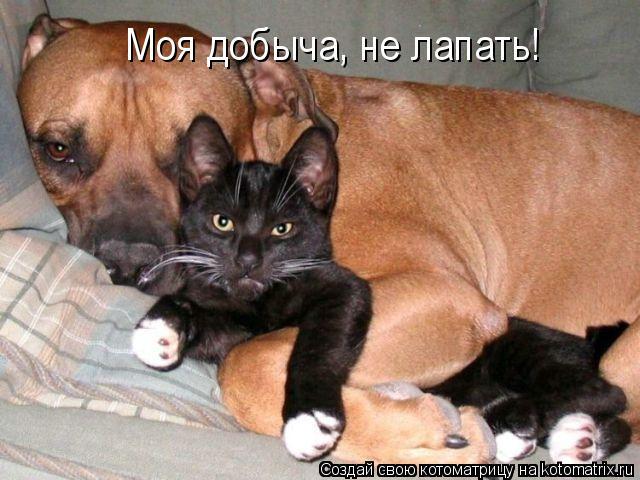 Котоматрица: Моя добыча, не лапать!