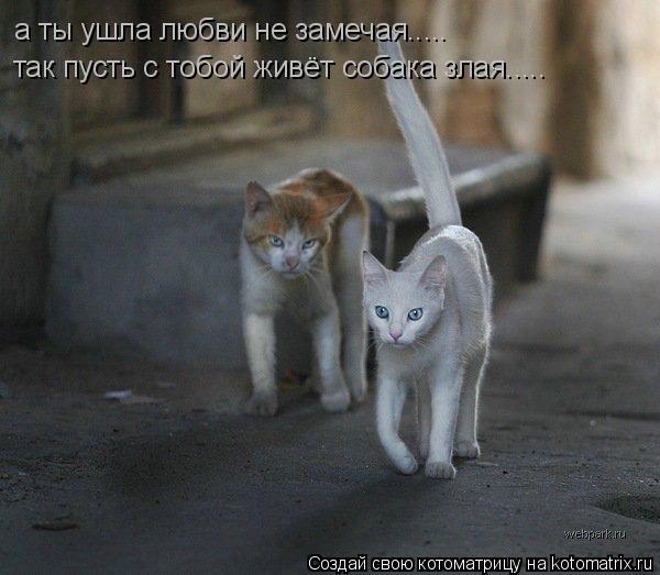 Котоматрица: а ты ушла любви не замечая..... а ты ушла любви не замечая..... так пусть с тобой живёт собака злая..... так пусть с тобой живёт собака злая..... а не