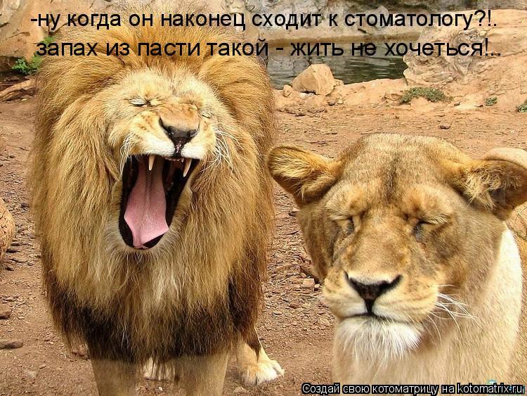 Котоматрица: -ну когда он наконец сходит к стоматологу?!. запах из пасти такой - жить не хочеться!..