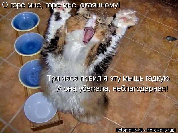 Котоматрица: O горе мне, горе мне, окаянному! Три часа ловил я эту мышь гадкую, А она убежала, неблагодарная!