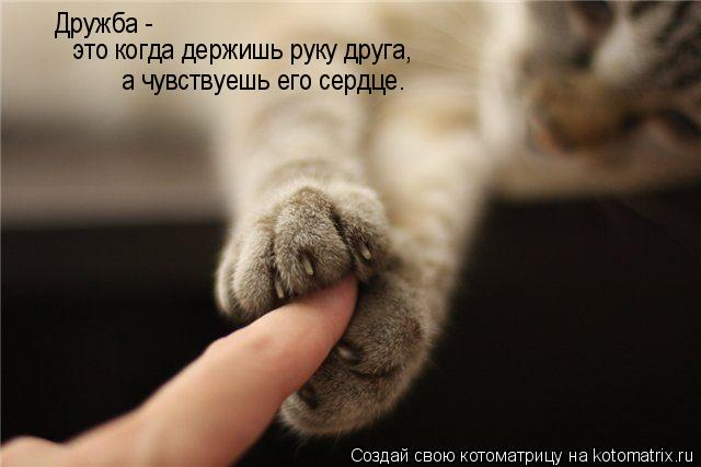 Котоматрица: Дружба -  это когда держишь руку друга, а чувствуешь его сердце.