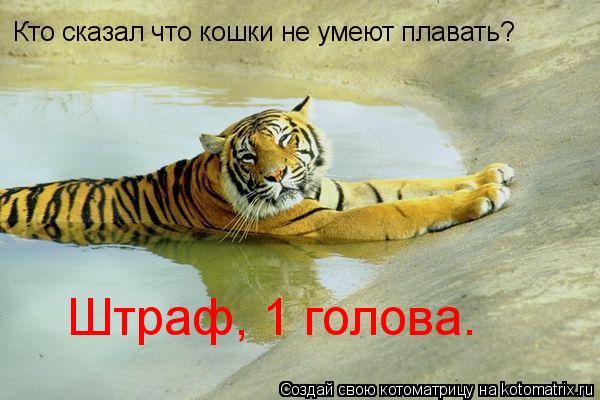 Котоматрица: Кто сказал что кошки не умеют плавать? Штраф, 1 голова.