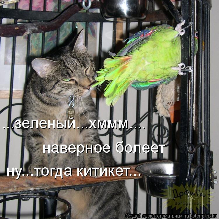 Котоматрица: ...зеленый...хммм.... наверное болеет ну...тогда китикет...