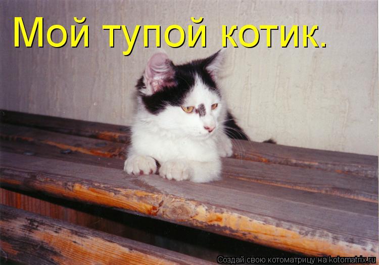 Котоматрица: Мой тупой котик.