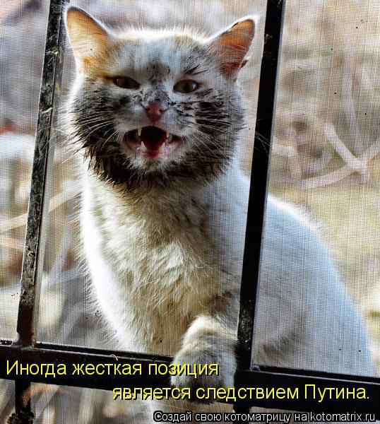 Котоматрица: Иногда жесткая позиция  является следствием Путина.