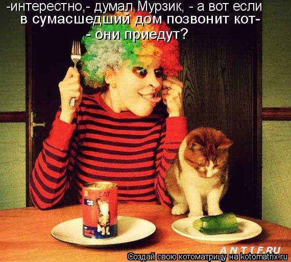 Котоматрица: -интерестно,- думал Мурзик, - а вот если  в сумасшедший дом позвонит кот-  - они приедут?