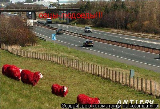 Котоматрица: овцы-людоеды!!!