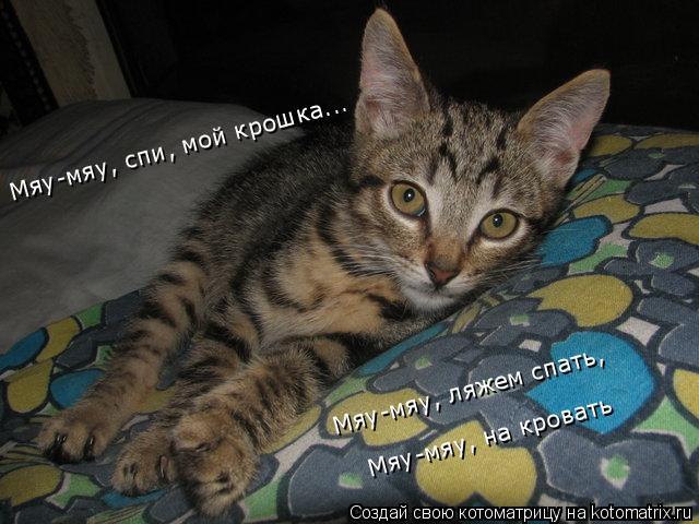 Котоматрица: Мяу-мяу, спи, мой крошка... Мяу-мяу, ляжем спать, Мяу-мяу, на кровать