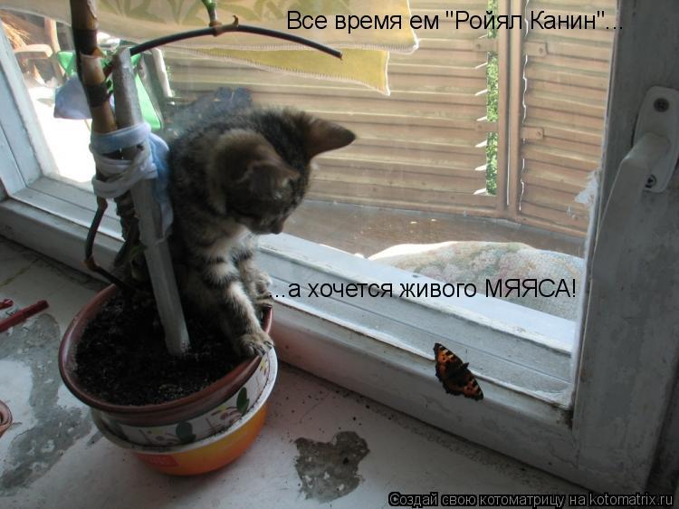 """Котоматрица: Все время ем """"Ройял Канин""""... ...а хочется живого МЯЯСА!"""