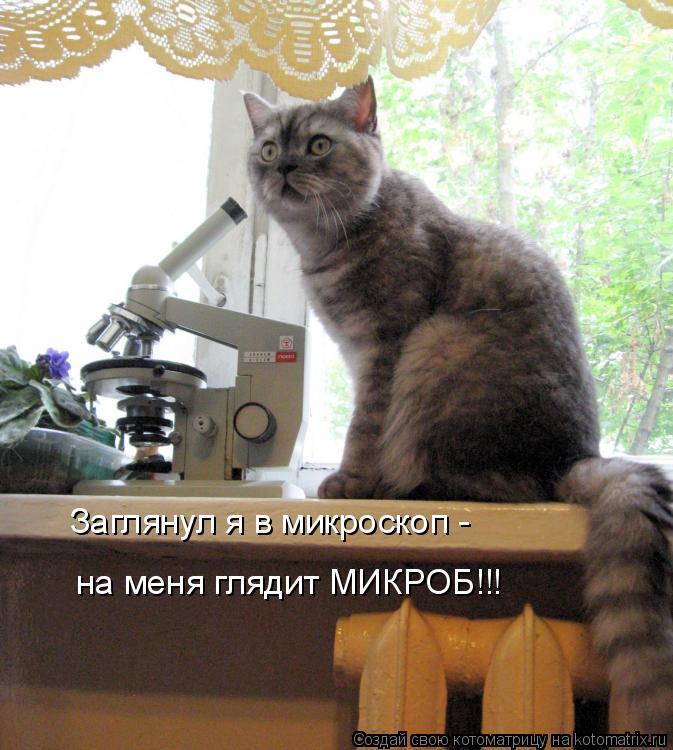 Котоматрица: Заглянул я в микроскоп - на меня глядит МИКРОБ!!!
