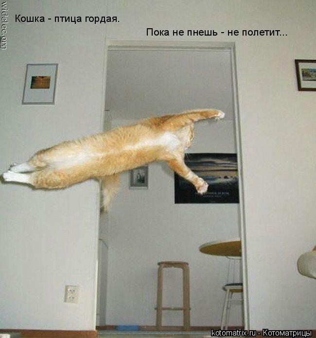 Котоматрица: Кошка - птица гордая. Пока не пнешь - не полетит...