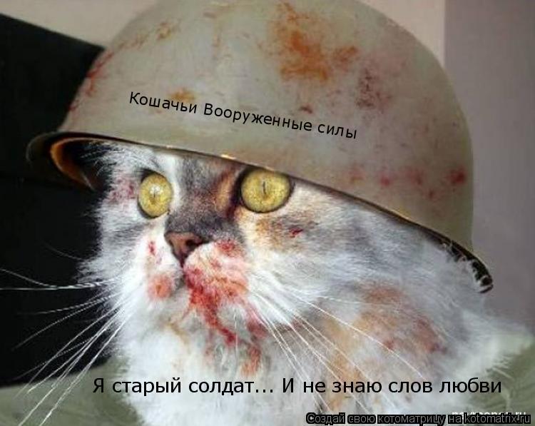 Котоматрица: Кошачьи Вооруженные силы Я старый солдат... И не знаю слов любви