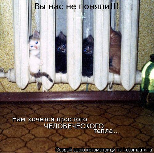 Котоматрица: Нам хочется простого ЧЕЛОВЕЧЕСКОГО  тепла... Вы нас не поняли!!!