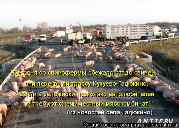 """Котоматрица: и требуют сжечь местный мясокомбинат!"""" взяли в заложноки несколько автолюбителей они перекрыли трассу Кукуево-Гадюкино,  """"Сегодня со свино"""