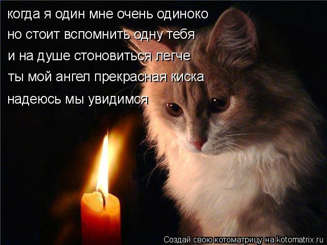 Котоматрица: когда я один мне очень одиноко но стоит вспомнить одну тебя и на душе стоновиться легче ты мой ангел прекрасная киска надеюсь мы увидимся