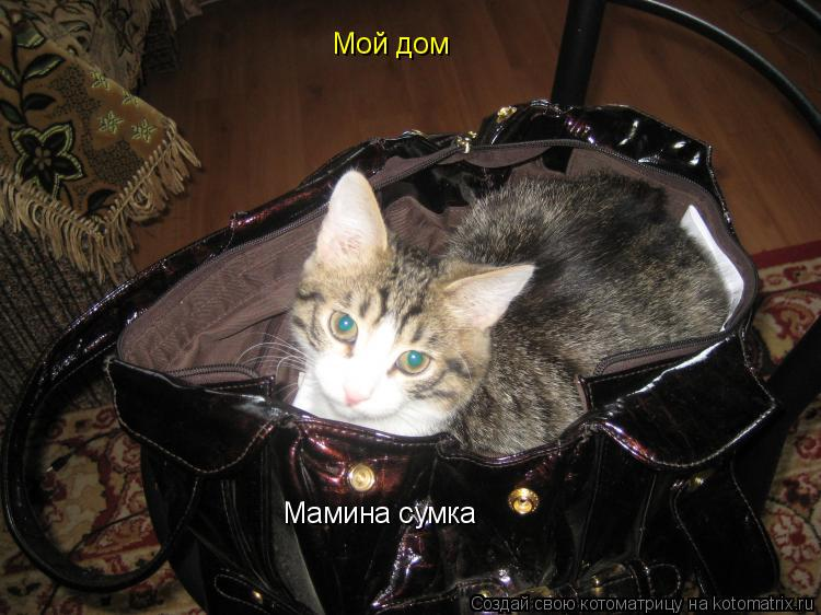 Котоматрица: Мой дом Мамина сумка