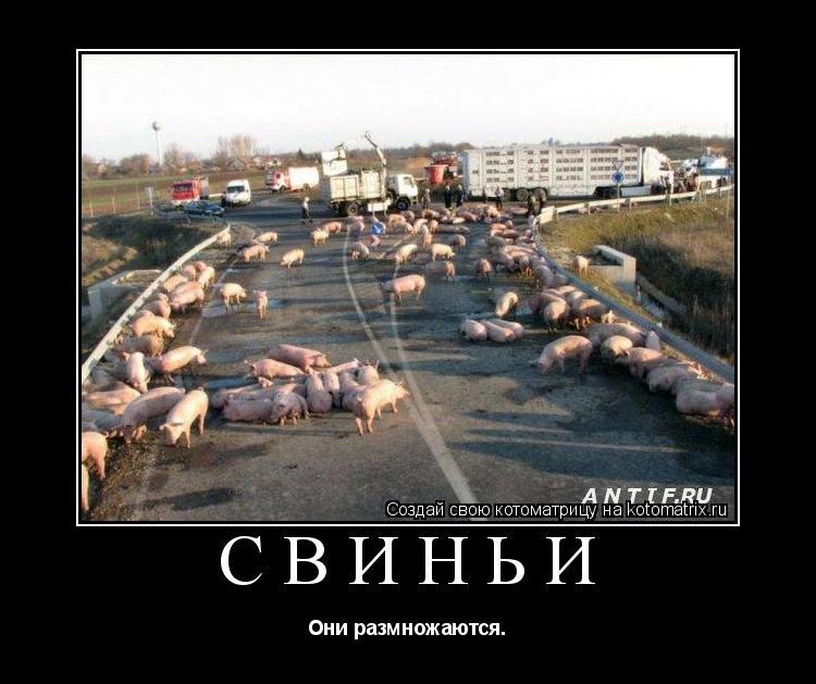 Котоматрица: Свиньи Они размножаются.