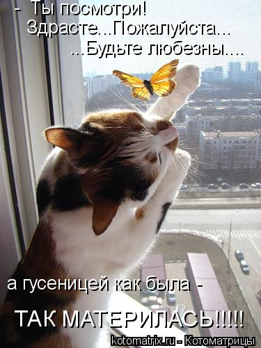 Котоматрица: -  Ты посмотри! Здрасте...Пожалуйста... ...Будьте любезны.... а гусеницей как была -  ТАК МАТЕРИЛАСЬ!!!!!