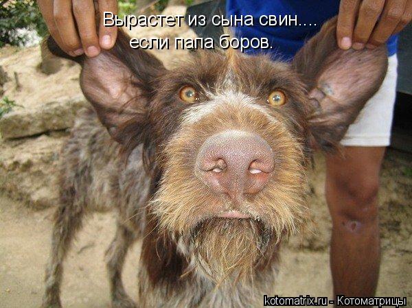 Котоматрица: Вырастет из сына свин.... если папа боров.