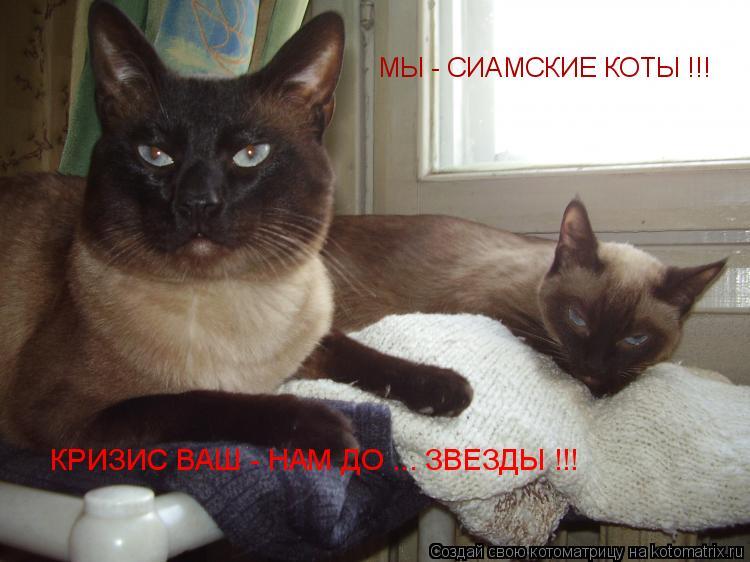 Котоматрица: МЫ - СИАМСКИЕ КОТЫ !!!  КРИЗИС ВАШ - НАМ ДО ... ЗВЕЗДЫ !!!