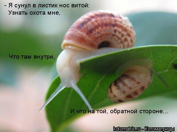 Котоматрица: - Я сунул в листик нос витой: Узнать охота мне, Что там внутри,  И что на той, обратной стороне...