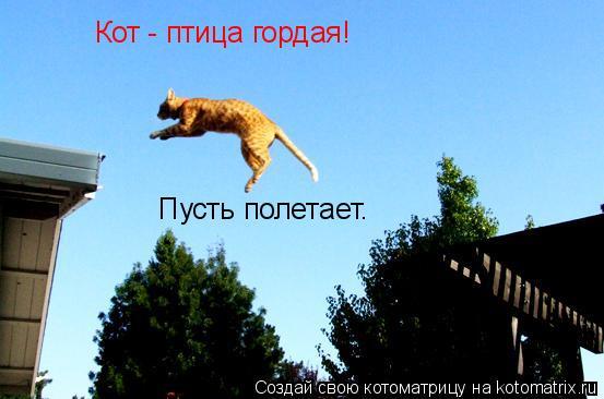 Котоматрица: Кот - птица гордая! Пусть полетает.
