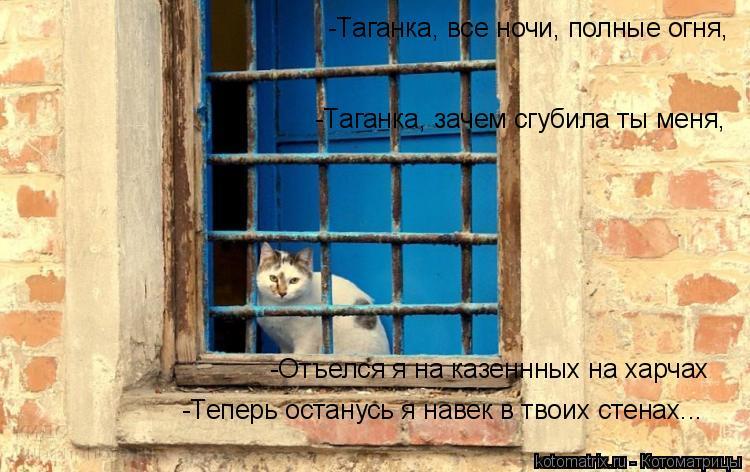 Котоматрица: -Таганка, все ночи, полные огня, -Таганка, зачем сгубила ты меня, -Отъелся я на казеннных на харчах -Теперь останусь я навек в твоих стенах...