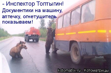 Котоматрица: - Инспектор Топтыгин!  Документики на машину,  аптечку, огнетушитель показываем!