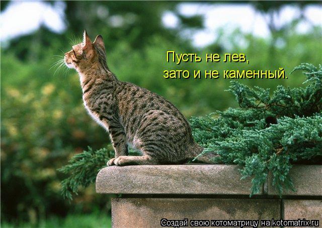 Котоматрица: Пусть не лев, зато и не каменный.
