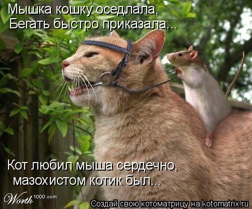 Котоматрица: Мышка кошку оседлала, Бегать быстро приказала... Кот любил мыша сердечно, мазохистом котик был...