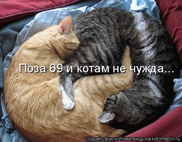 Котоматрица: Поза 69 и котам не чужда...