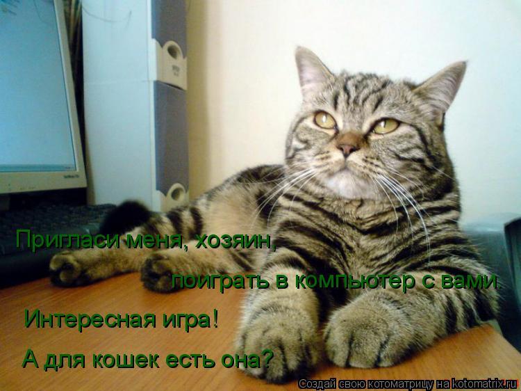 Котоматрица: Пригласи меня, хозяин, поиграть в компьютер с вами. Интересная игра! А для кошек есть она?