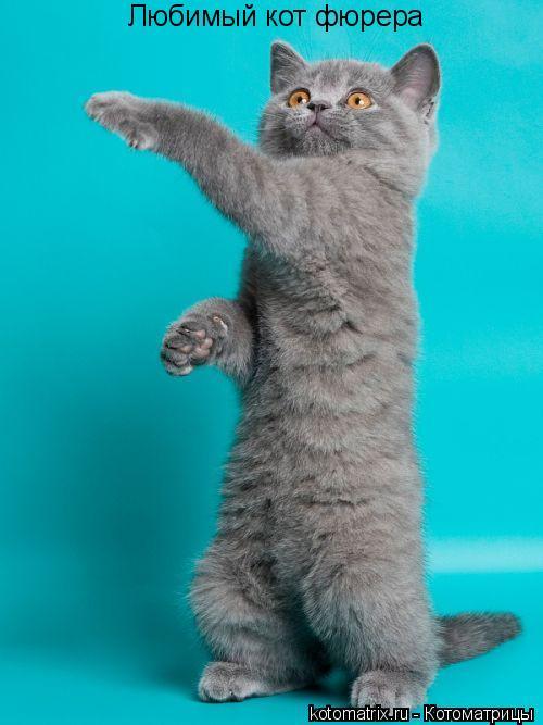 Котоматрица: Любимый кот фюрера