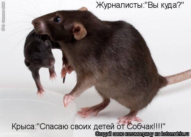 """Котоматрица: Журналисты:""""Вы куда?"""" Крыса:""""Спасаю своих детей от Собчак!!!!"""""""