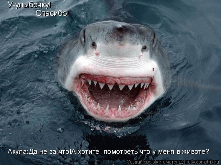 Котоматрица: У-улыбочку! Спасибо! Акула:Да не за что!А хотите  помотреть что у меня в животе?