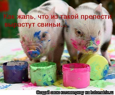 Котоматрица: Как жаль, что из такой прелести вырастут свиньи...